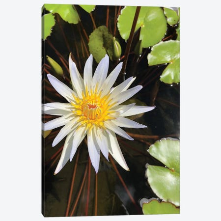 Water Lilies II Canvas Print #ORL438} by Irena Orlov Canvas Print