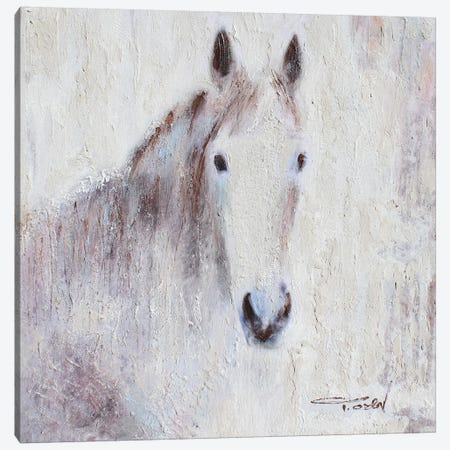 White Bay Horse III Canvas Print #ORL440} by Irena Orlov Canvas Artwork