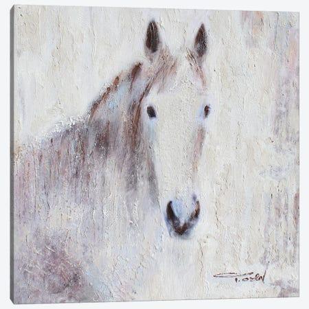 White Bay Horse III Canvas Print #ORL440} by Irena Orlov Canvas Artwork
