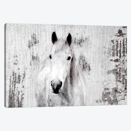 White Western Horse I Canvas Print #ORL446} by Irena Orlov Canvas Art Print