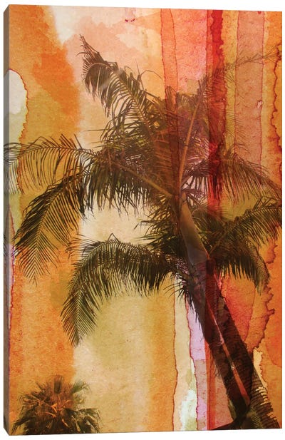 Palm Tree Canvas Print #ORL44