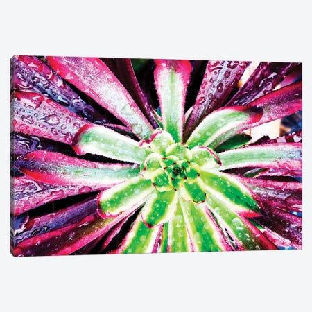 Bright Exotic I 3-Piece Canvas #ORL451} by Irena Orlov Canvas Print