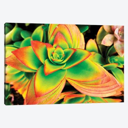 Bright Exotic II 3-Piece Canvas #ORL452} by Irena Orlov Canvas Print
