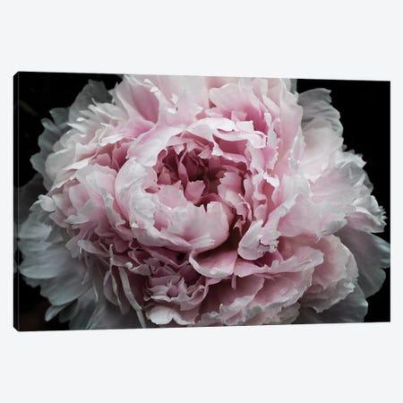 Pink Peony Passion I Canvas Print #ORL453} by Irena Orlov Art Print