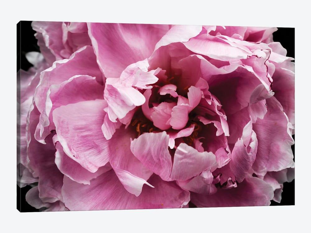 Pink Peony Passion III by Irena Orlov 1-piece Canvas Art