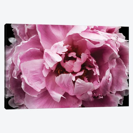 Pink Peony Passion III Canvas Print #ORL455} by Irena Orlov Canvas Art