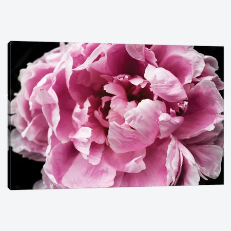 Pink Peony Passion IV Canvas Print #ORL456} by Irena Orlov Canvas Wall Art