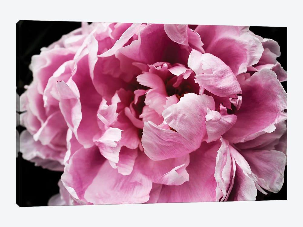 Pink Peony Passion IV by Irena Orlov 1-piece Canvas Print