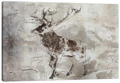 Brown Deer III Canvas Art Print