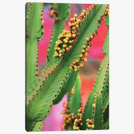 In A Cactus Mood I Canvas Print #ORL509} by Irena Orlov Art Print