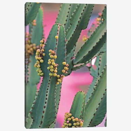 In A Cactus Mood II Canvas Print #ORL510} by Irena Orlov Canvas Wall Art
