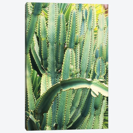 In A Cactus Mood V Canvas Print #ORL512} by Irena Orlov Canvas Artwork
