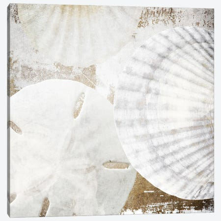 White Shells II Canvas Print #ORL756} by Irena Orlov Canvas Art Print