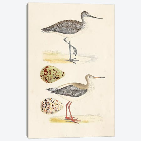 Sandpipers & Eggs I Canvas Print #ORR1} by Morris Canvas Art