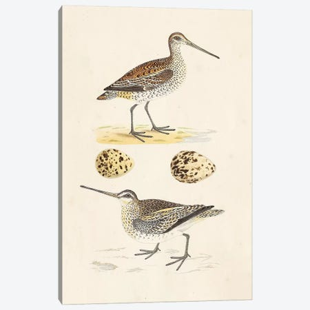 Sandpipers & Eggs III Canvas Print #ORR3} by Morris Canvas Art