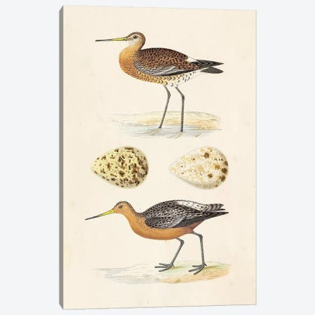 Sandpipers & Eggs IV Canvas Print #ORR4} by Morris Art Print