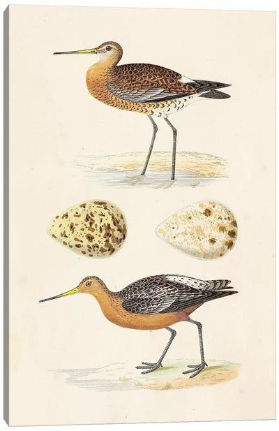 Sandpipers & Eggs IV Canvas Art Print