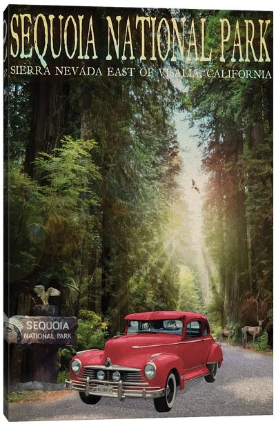 Sequioa National Park Canvas Art Print
