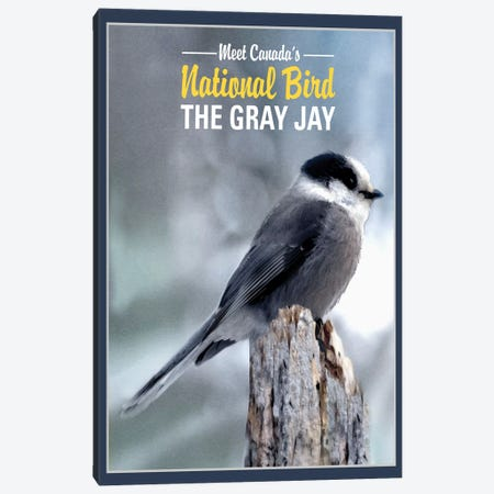 Gray Jay, Canada's National Bird Canvas Print #ORT39} by Old Red Truck Art Print