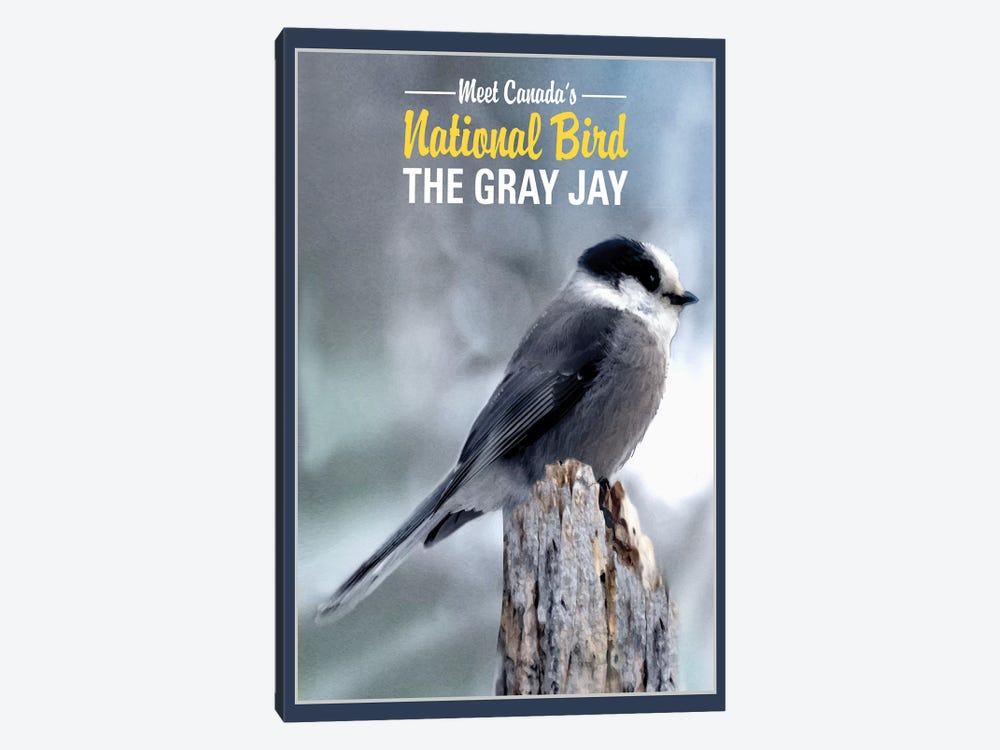 Gray Jay, Canada's National Bird by Old Red Truck 1-piece Canvas Artwork