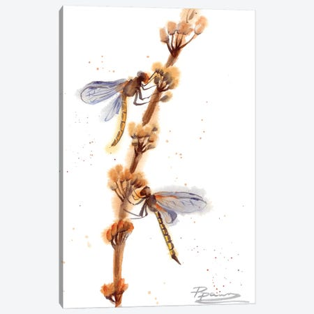 Dragonflies Canvas Print #OSF109} by Olga Shefranov Art Print