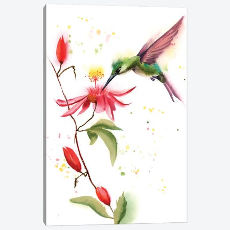 Humming Bird II Canvas Print #OSF171} by Olga Shefranov Canvas Wall Art