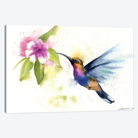 Hummingbird Canvas Print #OSF172} by Olga Shefranov Canvas Artwork
