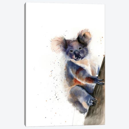 Koala Canvas Print #OSF186} by Olga Shefranov Canvas Art