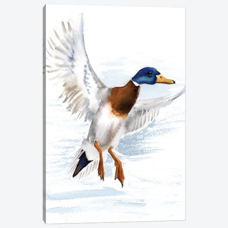 Mallard Canvas Print #OSF195} by Olga Shefranov Canvas Print
