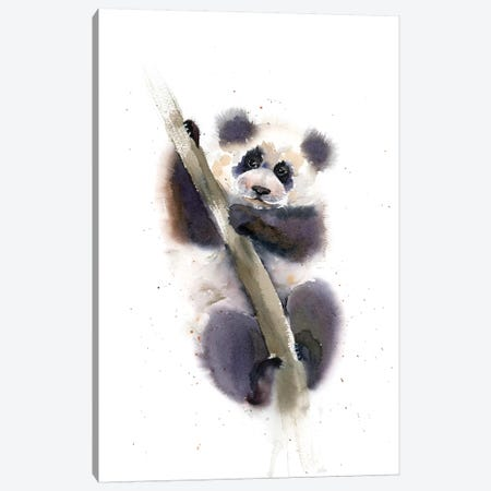 Pandy Canvas Print #OSF231} by Olga Shefranov Canvas Art Print