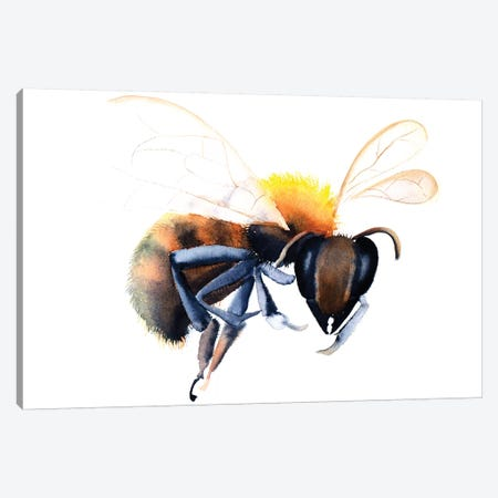 Bee Canvas Print #OSF23} by Olga Shefranov Canvas Print