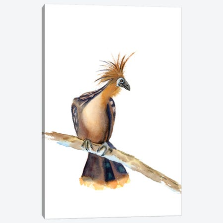 Perched Bird II Canvas Print #OSF244} by Olga Shefranov Canvas Art Print