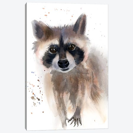 Raccoon Canvas Print #OSF284} by Olga Shefranov Canvas Print
