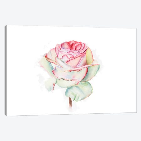 Rose Canvas Print #OSF299} by Olga Shefranov Canvas Art Print