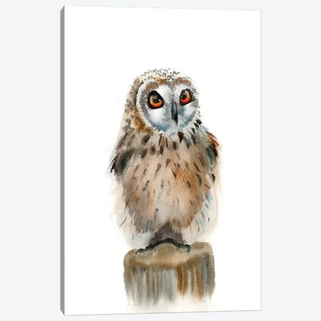 Spotted Owl Canvas Print #OSF319} by Olga Shefranov Canvas Art