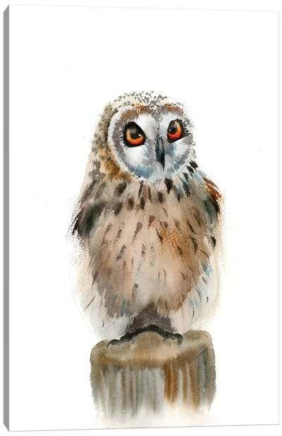 Spotted Owl Canvas Art Print