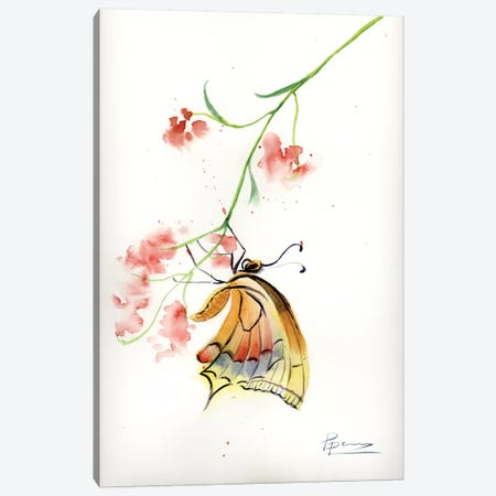 Butterfly II Canvas Print #OSF59} by Olga Shefranov Canvas Artwork
