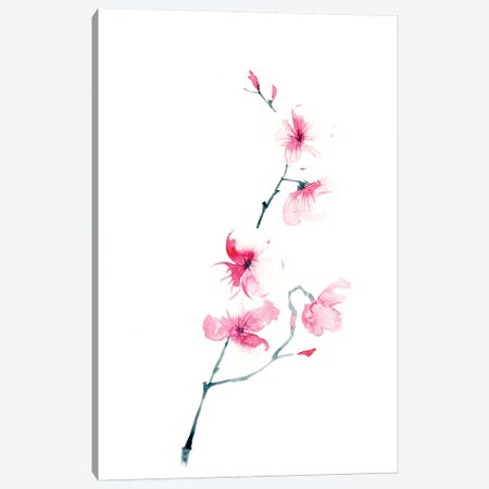 Cherry Blossom Canvas Print #OSF76} by Olga Shefranov Art Print