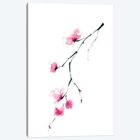 Cherry Blossom II Canvas Print #OSF77} by Olga Shefranov Canvas Print