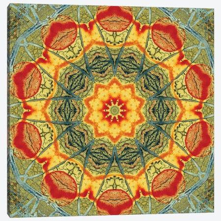 Indo Mandala II Canvas Print #OST53} by LuAnn Ostergaard Canvas Art