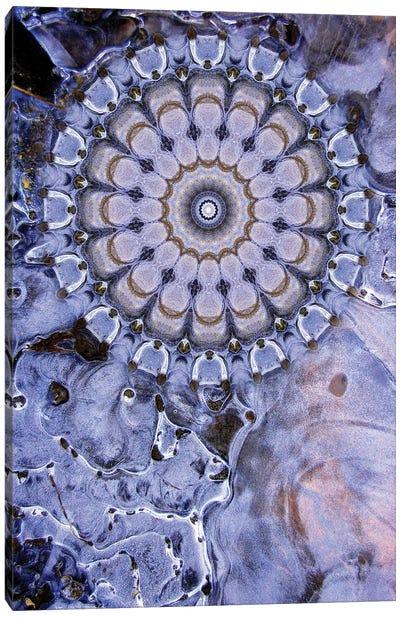 Caligo Mandala Canvas Art Print