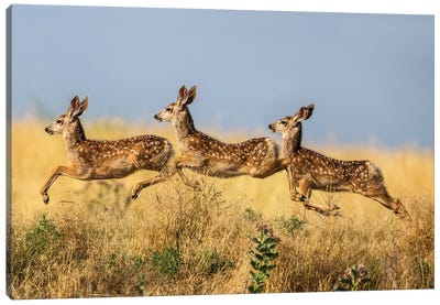 Tripple Jump Canvas Art Print