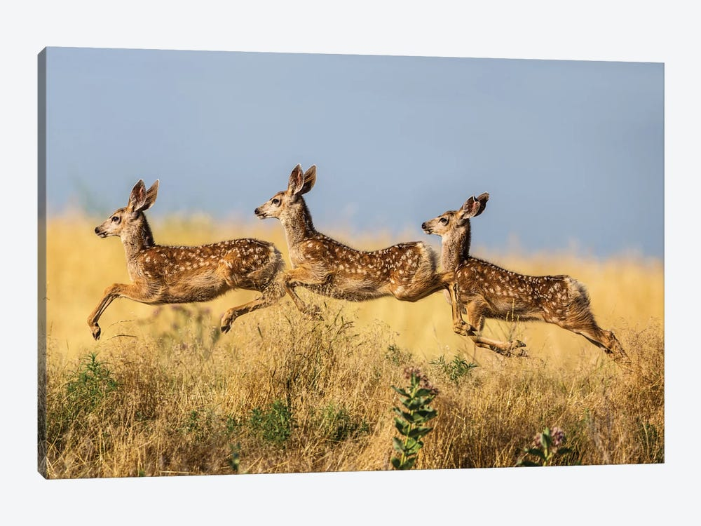Tripple Jump by verdon 1-piece Canvas Wall Art