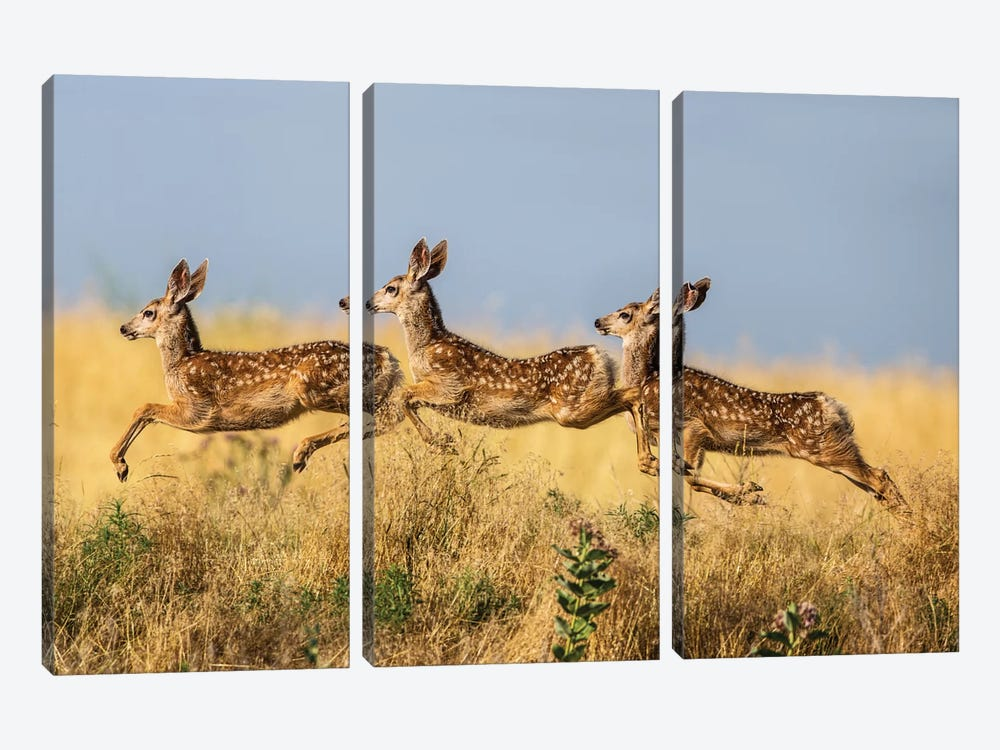 Tripple Jump by verdon 3-piece Canvas Artwork
