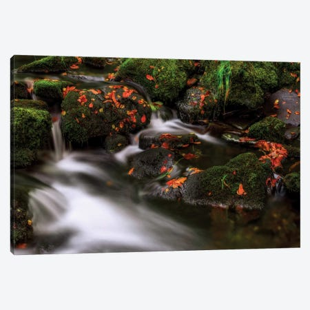 Autumn Melodies Canvas Print #OXM1062} by Yavuz Pancareken Canvas Art