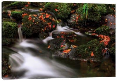 Autumn Melodies Canvas Art Print