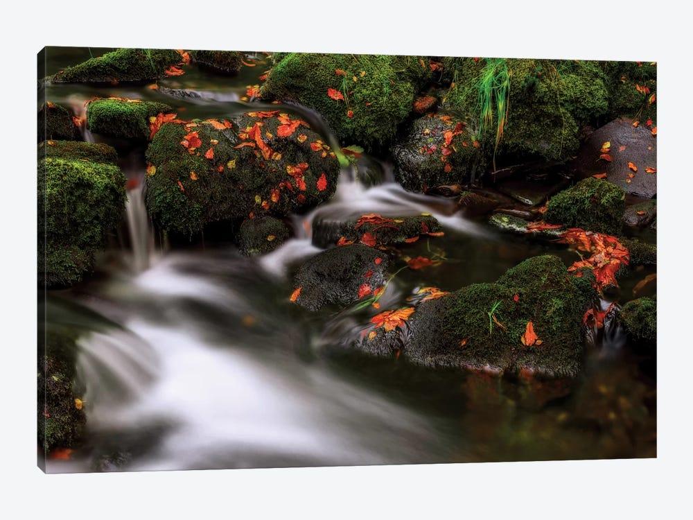Autumn Melodies by Yavuz Pancareken 1-piece Canvas Art Print