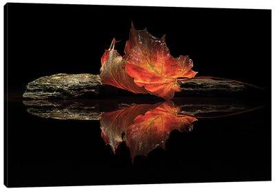 Autumn Colors Canvas Print #OXM1077