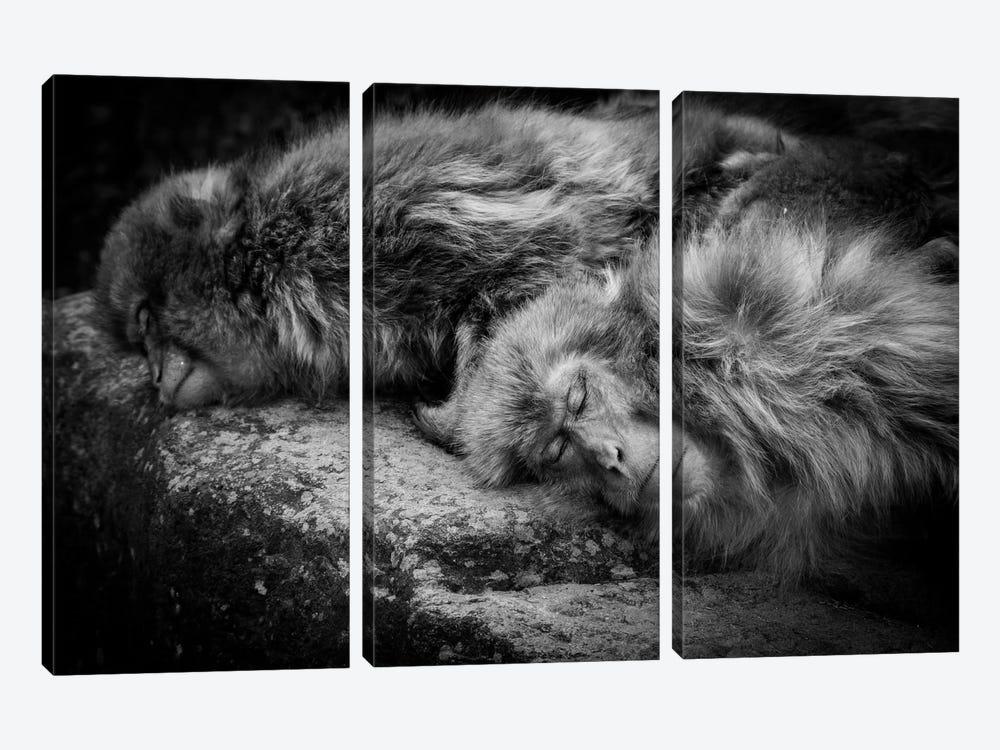 Sleeping by Akihiro Shibata 3-piece Art Print