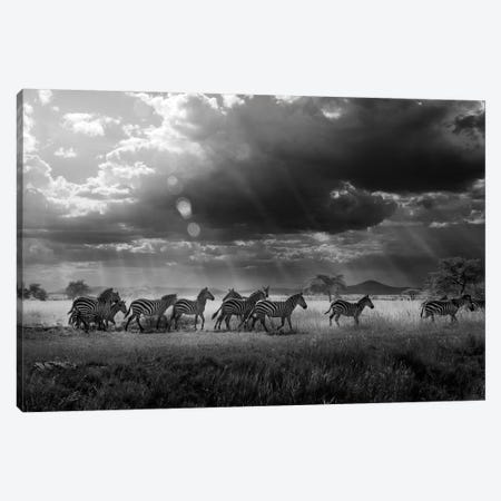 Zebra's Paradise Canvas Print #OXM1089} by Alberto Ghizzi Panizza Canvas Wall Art